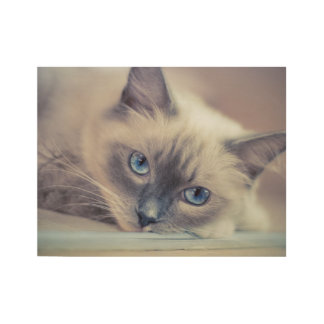 Ragdoll‎ Cat Wood Poster