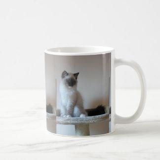 Ragdoll_kitten Basic White Mug