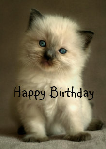 Ragdoll Kitten Birthday Card