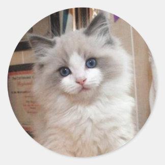 Ragdoll Kitten Cutie Round Stickers