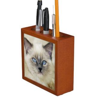 Ragdoll kitten desk organiser