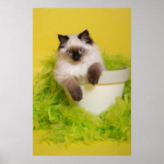 ragdoll kitten in a plant pot poster