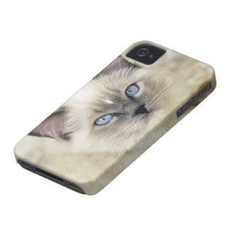 Ragdoll kitten iPhone 4 cases