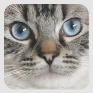 Ragdoll Kitten Sticker