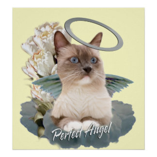 Ragdoll Perfect Angel Kitten poster