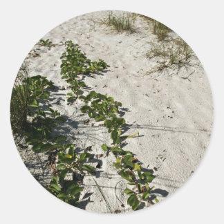 Railroad vine and white sand round sticker