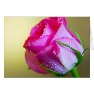 Rain Drop Kisses of Nature on Pink Rose Card