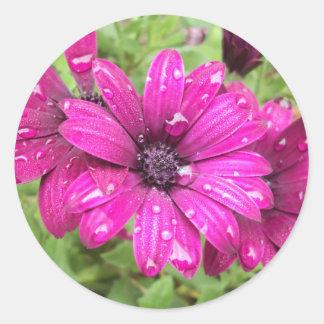 Rain Droplets on Purple Daisies Classic Round Sticker