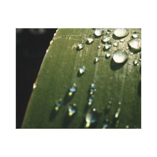 Rain Drops on Leaf Stretched Canvas Print