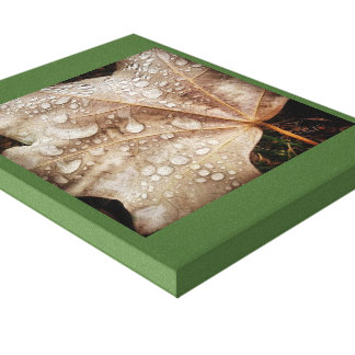 Rain drops on leaf stretched canvas prints
