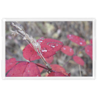 Rain Drops on Red Leaves Acrylic Tray