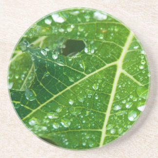 Rain Drops on Tropical Green Papaya Leaf Coaster