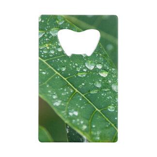 Rain Drops on Tropical Papaya Leaf