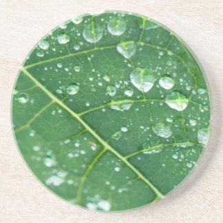 Rain Drops on Tropical Papaya Leaf Coaster