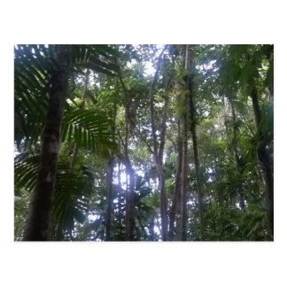 Rain Forest Postcard