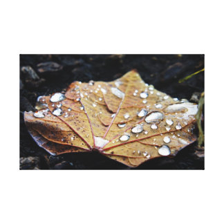 Rain on a Leaf Stretched Canvas Prints