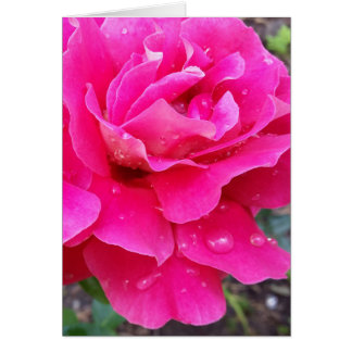 Rain on petals card