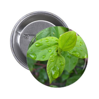 Rain over leaves 6 cm round badge