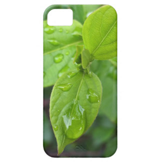 Rain over leaves iPhone 5 covers