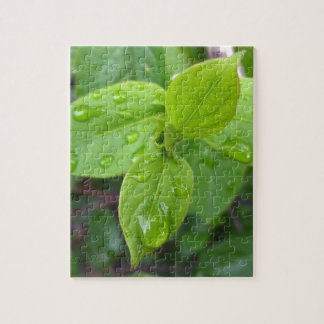 Rain over leaves jigsaw puzzle