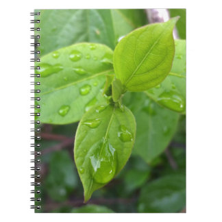 Rain over leaves spiral notebook