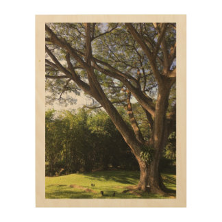 Rain Tree Wood Wall Art