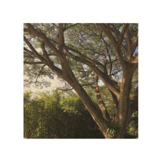 Rain Tree Wood Wall Decor