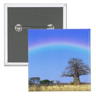 Rainbow and African baobab tree, Adansonia 15 Cm Square Badge