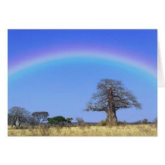 Rainbow and African baobab tree, Adansonia Card