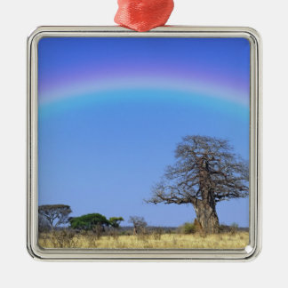 Rainbow and African baobab tree, Adansonia Silver-Colored Square Decoration