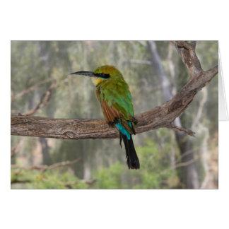 Rainbow bee-eater bird, Australia Card