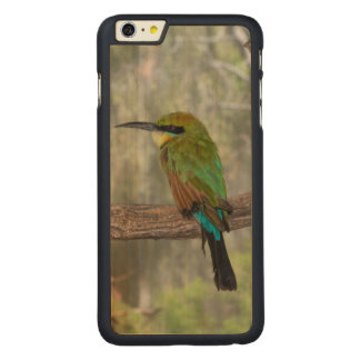 Rainbow bee-eater bird, Australia Carved® Maple iPhone 6 Plus Case