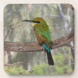 Rainbow bee-eater bird, Australia Coaster