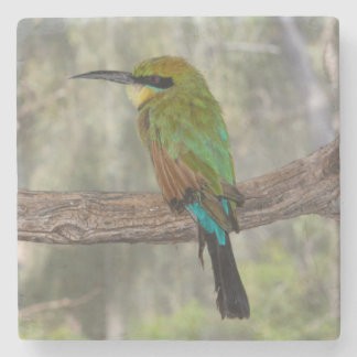 Rainbow bee-eater bird, Australia Stone Coaster