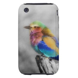 Rainbow Bird iPhone 3 Tough Case