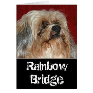 Rainbow Bridge - my buddy Card