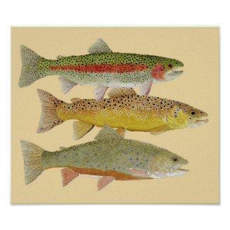 Rainbow,Brown & Brook Trout on Colorful background Poster