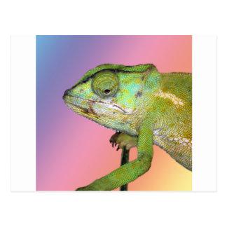 Rainbow chameleon post card