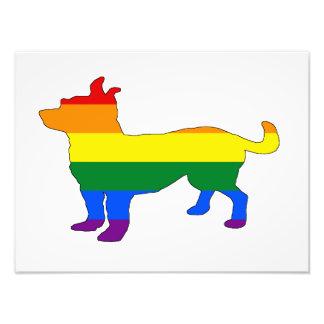 Rainbow Chihuahua Photo Print