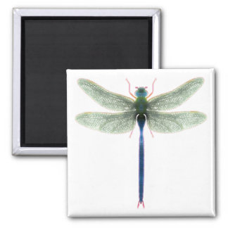 Rainbow Dragonfly Square Magnet