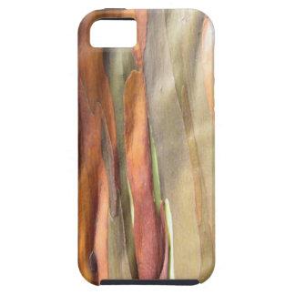 Rainbow Eucalyptus case