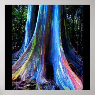 RAINBOW HAWAII EUCALYPTUS TREE poster