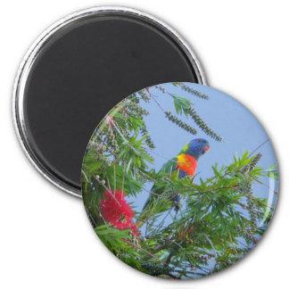 Rainbow Lorikeet 6 Cm Round Magnet