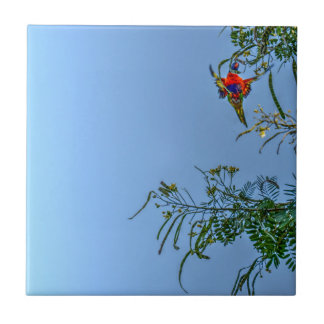 RAINBOW LORIKEET AUSTRALIA ART EFFECTS CERAMIC TILE