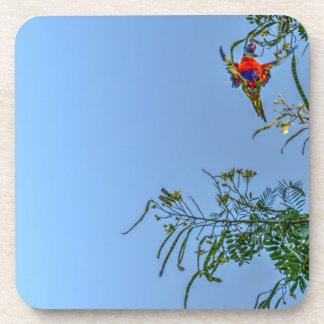 RAINBOW LORIKEET AUSTRALIA ART EFFECTS COASTER