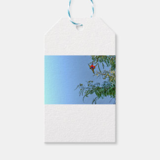 RAINBOW LORIKEET AUSTRALIA ART EFFECTS GIFT TAGS
