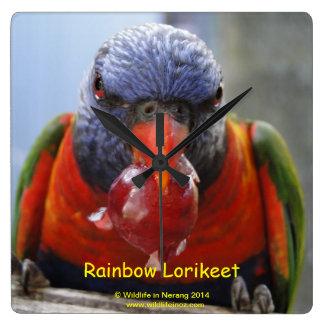 Rainbow Lorikeet Square Wallclock