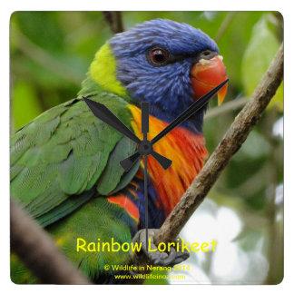 Rainbow Lorikeet Clocks