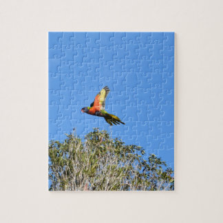 RAINBOW LORIKEET IN FLIGHT QUEENSLAND AUSTRALIA JIGSAW PUZZLE