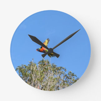 RAINBOW LORIKEET IN FLIGHT QUEENSLAND AUSTRALIA ROUND CLOCK